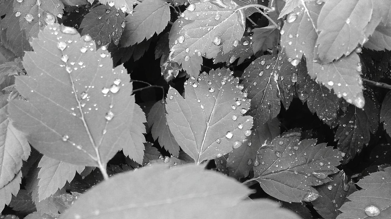 leaf, drop, weather, water, wet, frozen, cold temperature, nature, ice, winter, day, fragility, outdoors, close-up, no people, raindrop, beauty in nature, plant, snow, growth, freshness