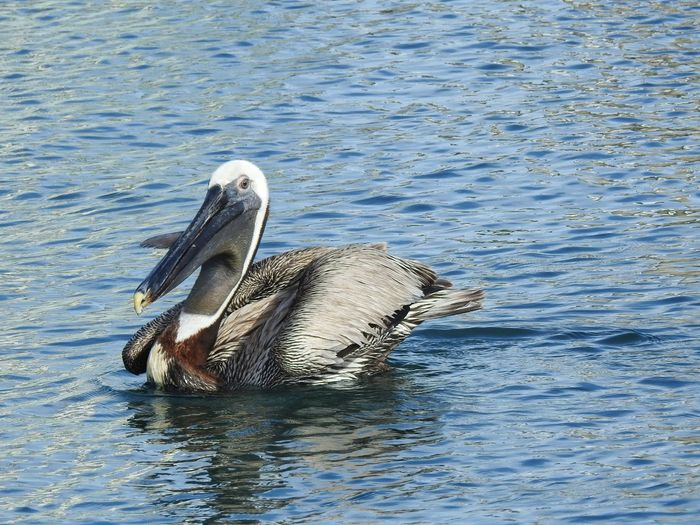 Sealife Animals