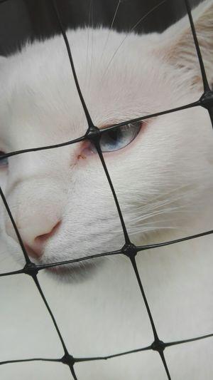 Cats Of EyeEm Eyebrow Beauty Pets Cats Lovers  No Liberty Iris - Eye Animals🐾 Cats