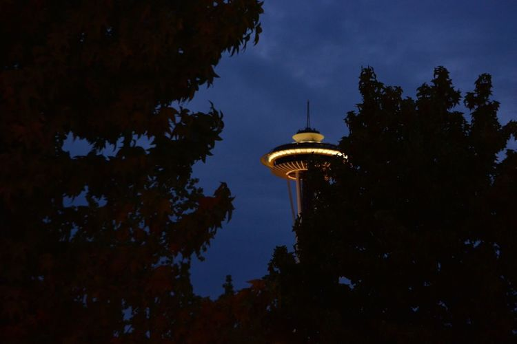 Low Angle View Tree Architecture Sky Night Seattle Space Needle