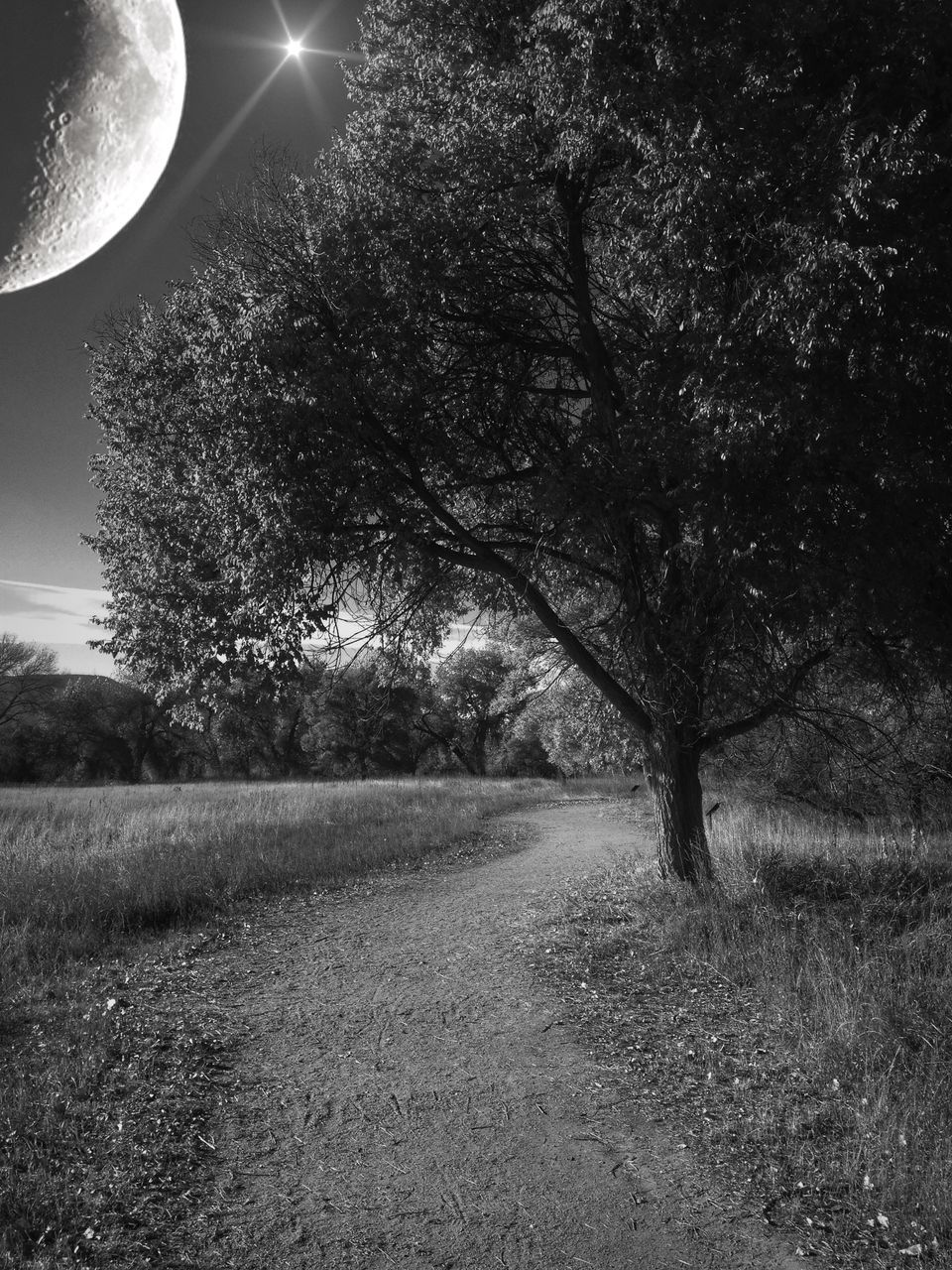 tree, moon, nature, tranquility, tranquil scene, beauty in nature, grass, no people, night, field, landscape, outdoors, scenics, growth, astronomy, sky