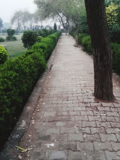 Jogging Track Tuesday Morning Run Run Run For Your Health Fitnessfirst Fitnessaddict Healthy Lifestyle Early Riser Good Life Live To The Fullest Phone Photography Starting The Day
