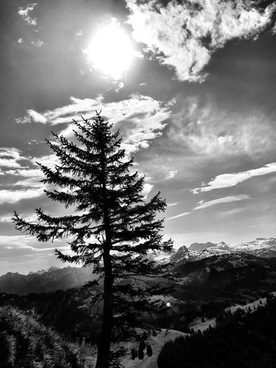 Plant Tree Sky Cloud - Sky Beauty In Nature Growth Nature Tranquility Sunlight No People Tranquil Scene Scenics - Nature Day Low Angle View Land Outdoors Silhouette