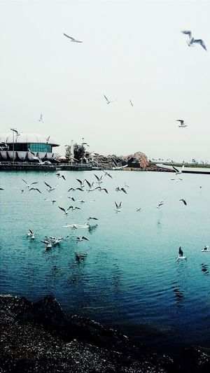 My city! 😍😉😊Sea And Sky Birds🐦⛅ Peaceful View Natural Beauty!