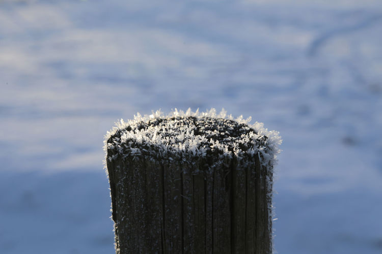 Close-up of wooden post on snow