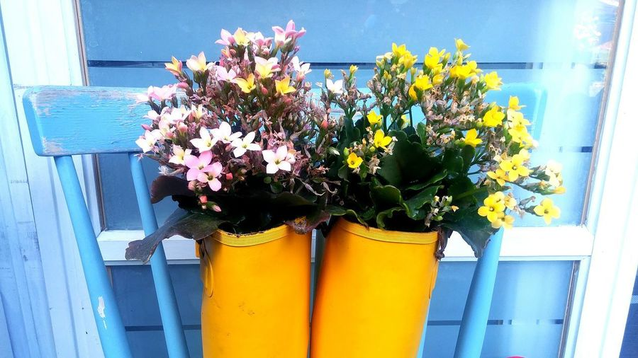 Flower Head Window Box Flower Yellow Window Potted Plant Vase Blue Blossom Close-up
