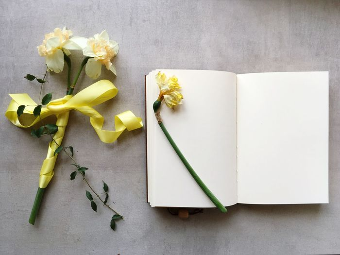 Flower, book, and heart Yellow Flower Narcissus Flowers Narcissus White Album White Paper White Page Paper Flatlayphotography Flatlay Still Life Paper Indoors  High Angle View Directly Above No People Table Flower Yellow Flowering Plant Creativity White Color Ribbon Gift Ribbon - Sewing Item Nature Plant Page Close-up Freshness