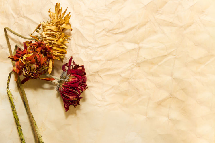 concept step of time with wilted flowers and old paper No People Indoors  Close-up Copy Space Flower Paper Decoration Still Life Plant Textile Pattern Gold Colored Flowering Plant Textured  Backgrounds White Color Studio Shot Crumpled Red Antique Wilted Plant Beans Soja Marchita Papel Viejostiempos Tiempo Texto Lugar Espacio Rosa Secas