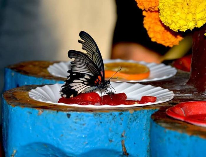 Flower Colors Colorful Shadow Butterflies Beauty In Nature