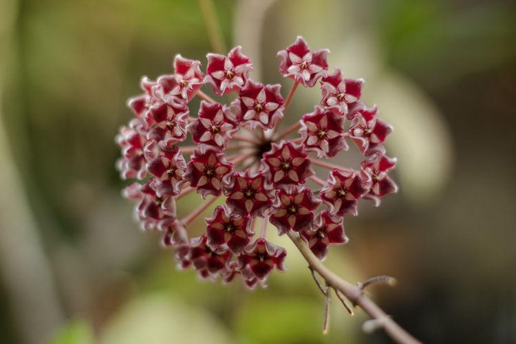 Group of flower