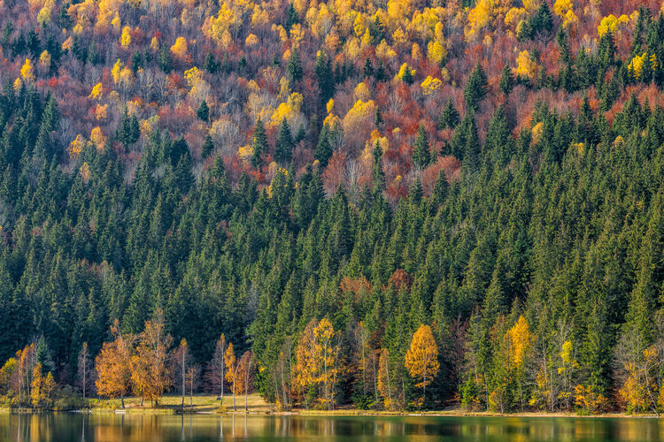 Scenic view of forest during autumn