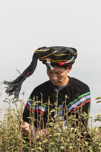 Yiliang, China - March 24, 2019: Two Black Yi man dressed in a traditional attire picking up tea leaves in Baohong mountain, Yiliang in Yunnan Yiliang Kunming, China Tea Tea Leaves Tea Harvesting Yi Minority Ethnic Group China ASIA Tea Garden Tea Production Tea Processing Puer Tea Oolong Tea