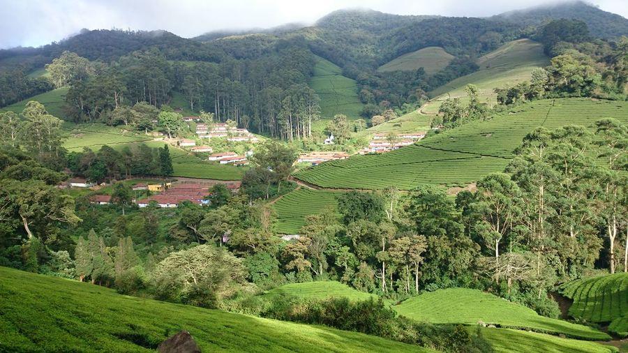 Beauty In Nature Rural Scene Lush - Description