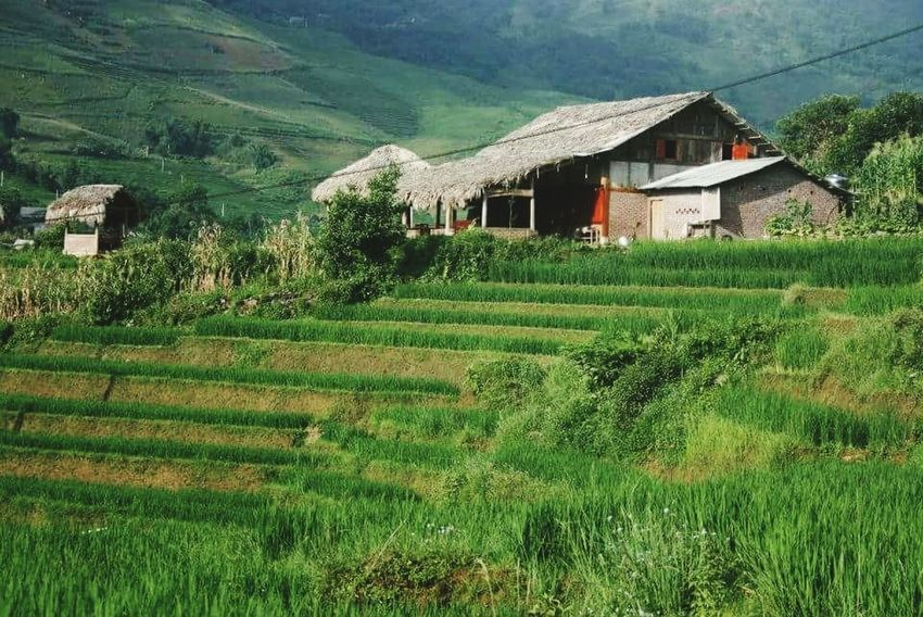 Farm Rural Scene Agriculture Hut World Travel Travel Travel Photography Vietnam Culture Vietnamphotography