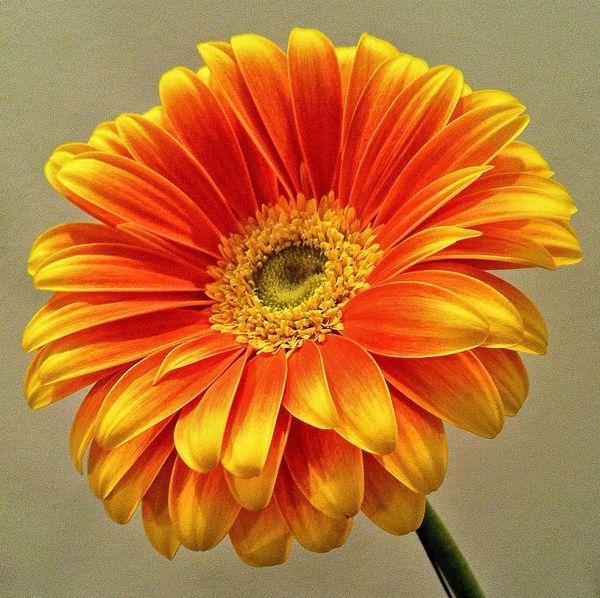Colorful Flowerpower Naturelovers Plant Plants And Flowers Plant Life Flowers Nature_perfection Jopesfotos - Nature