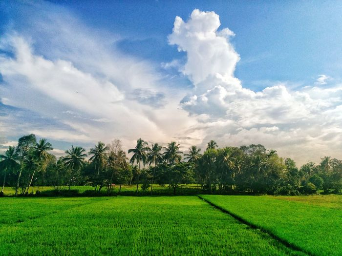 Perspectives On Nature how beautiful is perspective of nature... can't imagine... Cloud - Sky Green Color Sky Nature Growth Beauty In Nature No People Tree Spraying Outdoors Day Love Of Nature