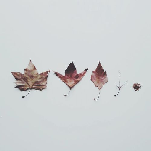 Fall Beauty Leaves Learn & Shoot: Simplicity Minimalist Autumn