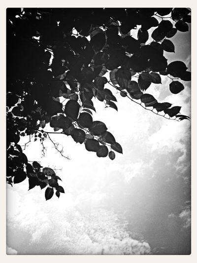 Leaves Tree Black & White Sky