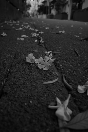 The Way Forward Fall Flower Head Selective Focus Plant Part Nature Street