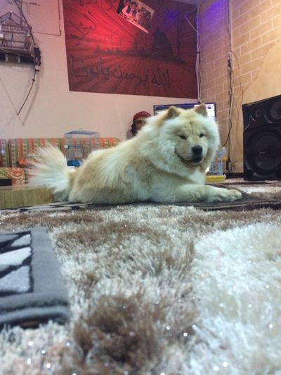 This Beloved Dog Bisha Cute Dog