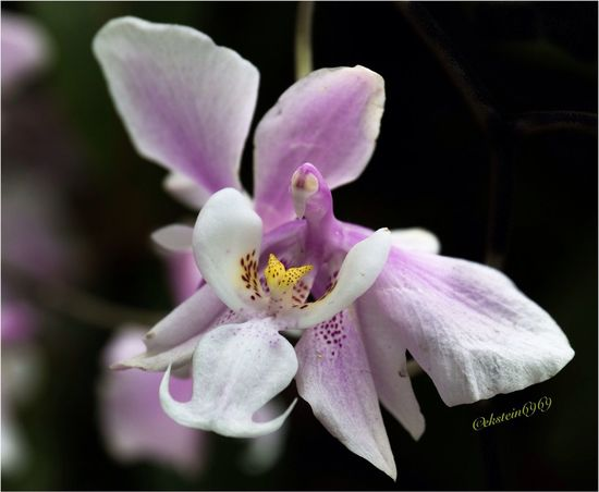 Flowerporn Macroclique EyeEm Best Shots - Nature Orchids