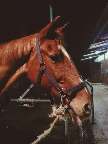 Wildlife Horse ♡ Elle