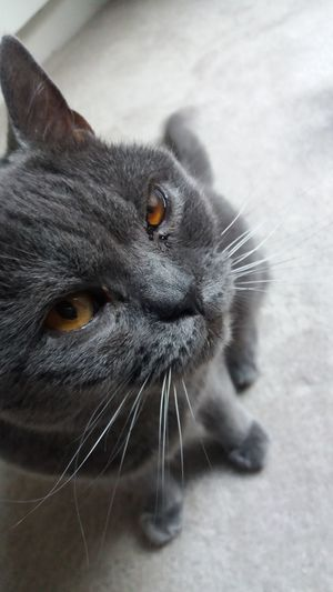 Same pic with Nofilter Noedit Inspirational Taking Photos Inspiration Check This Out Old Old Cat Kitten Feline Grey Cat Animals Love Cats The Closer The Better