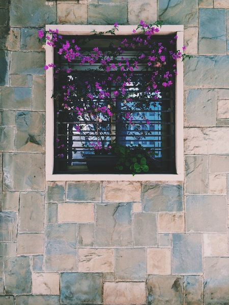 Life at inert places. Window Wall Vscocam Shootermag