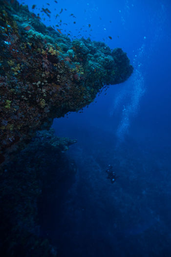 green island, Taiwan Aquatic Sport Beauty In Nature Coral Day Nature No People Outdoors Scenics Scuba Diving Sea Sea Life Swimming UnderSea Underwater Underwater Diving Water Wetsuit