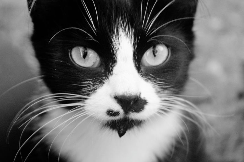 Cats Cat Lovers Drinking Water Cat Outdoor Photography Animals Nature Showcase July Mustache Animal Photography Water Black And White