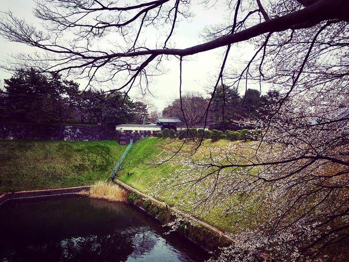 半蔵門 千鳥ヶ淵 麹町 Tokyo Tokyo,Japan Bridge - Man Made Structure Beauty In Nature Hello World Enjoying Life Relaxing 3XSPUnity