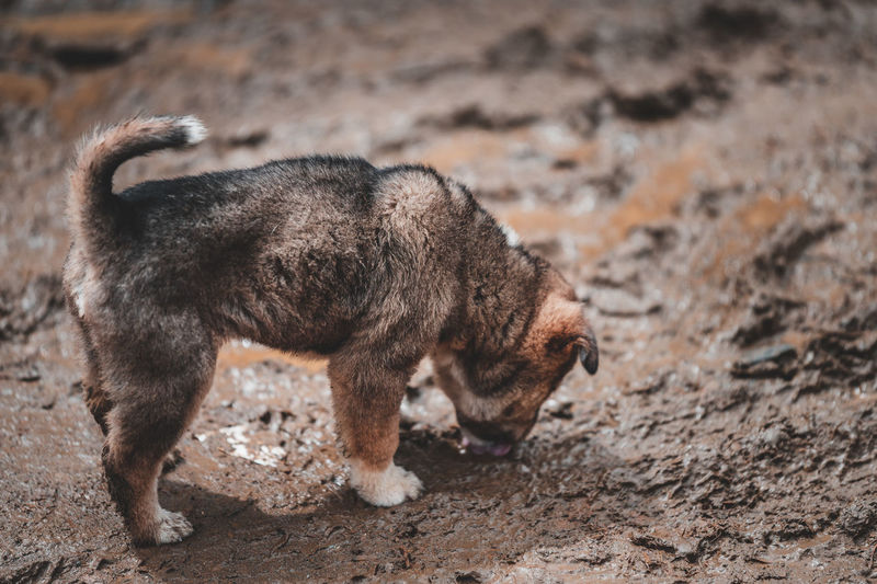 High angle view of dog standing in mud