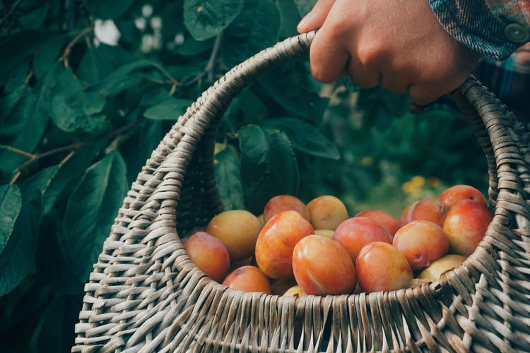 Cropped image of person holding fruits in basket