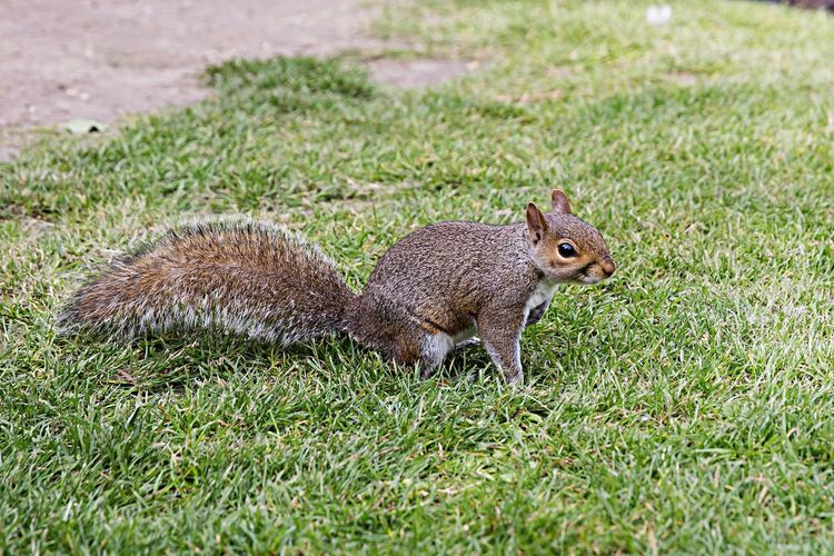 Animal Eye Em Nature Lover Squirrel EyeEm Nature Lover