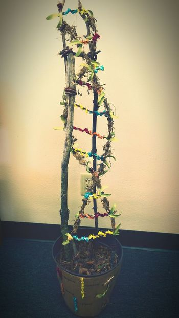 The Mix Up Science Meets Art Science Project Biology Dna Double Helix Artificial Flowers