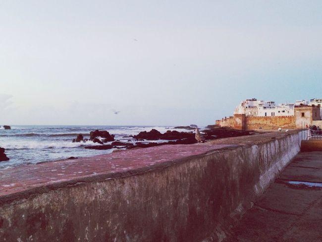 Morocco Essaouira Marokko Medina Meer Ocean Möwe Gull