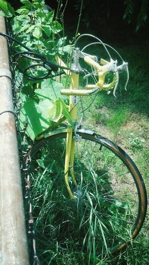 Bike being swallowed up by weeds.