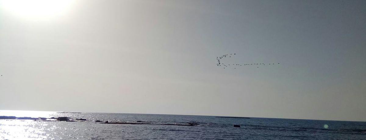 Bird Flying Sea Animal Wildlife Water Flock Of Birds Nature