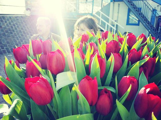tulips Photography Flowers Catchingsunrays at Amsterdam
