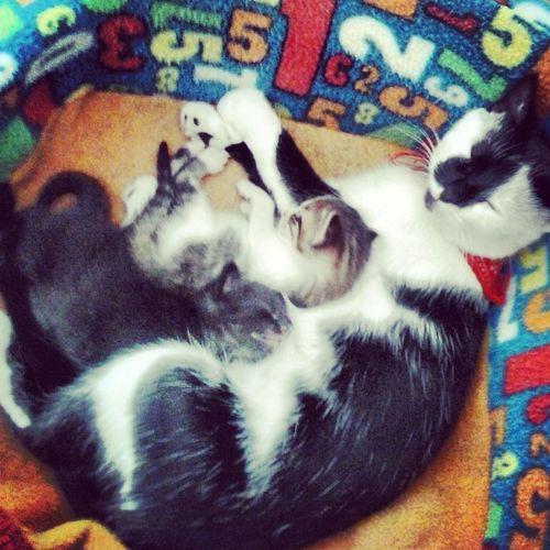 Gatitos Bellos Cats