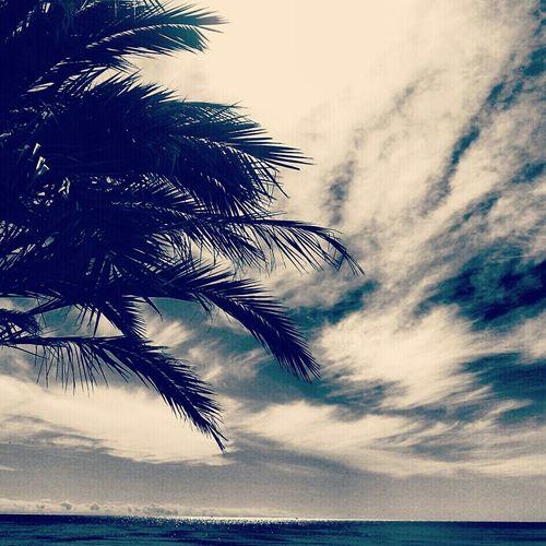 Relaxing Nature Blue Dreams Movilgrafias
