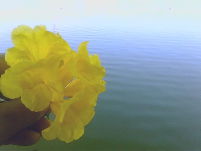 Yellow Nature Beauty In Nature Water Flower Outdoors Multi Colored