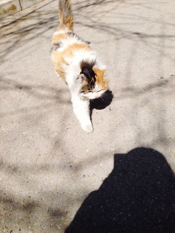 Catch my shadow😸 Hi! Taking Photos Funny Cat♡ Relaxing