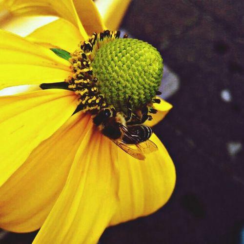 Biene an einer Blume Nature Flowers Bee 🐝