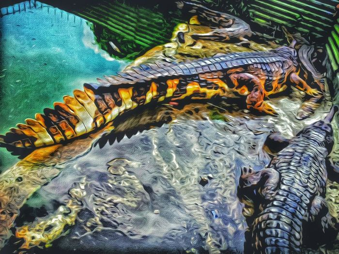 😘🔫 Animalphotography Wild Animal Crocodiles Hanging Out Taking Photos Relaxing Showcase March Everyday Objects Photography INDONESIA Playing With Filters Travelgram Learn & Shoot: Balancing Elements Explore Have A Nice Day♥ Exceptional Photographs Atmospheric Mood EyeEm Best Shots EyeEm Best Shots - Nature From My Point Of View From Where I Stand Wanderlust EyeEm Best Edits Eye4photograghy Fantastic Exhibition