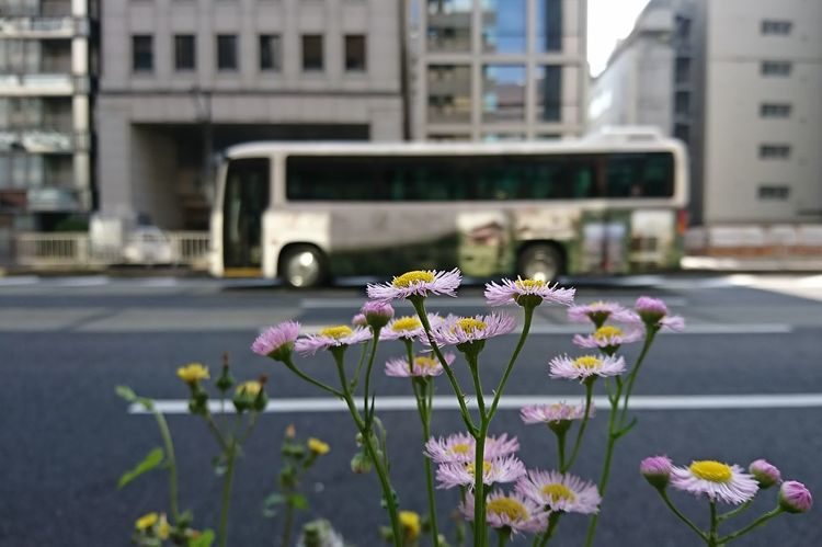 Flower Flowerporn Street Outdoors City Day Bus No People Nature Close-up Flower Head Cityscape 春柴苑