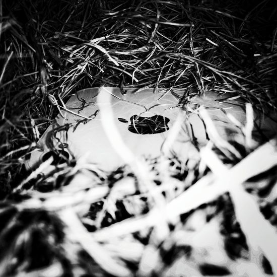 Mobilephotography Hanging Out Taking Photos Blackandwhite Apple IPhone Drygrass Oneplusonephotography Night Iphone Burried In Grass