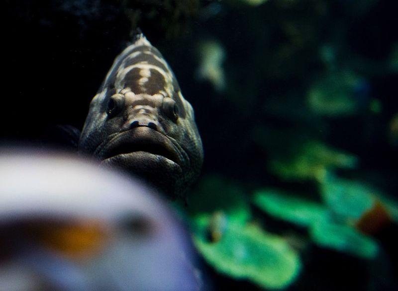 Animal Animal Themes No People Animal Wildlife Close-up Representation Art And Craft Sculpture Statue Underwater Sea Night Nature Animals In The Wild Water Sea Life Mammal One Animal Marine