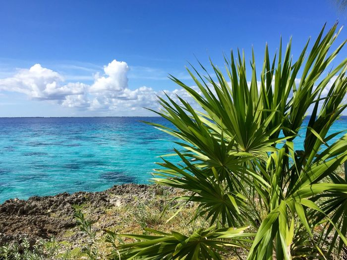 Sky Tropical Climate Land Sea Beauty In Nature Nature Water Plant Scenics - Nature Beach Day Tranquility Cloud - Sky Palm Tree No People Blue Horizon Tranquil Scene Leaf Horizon Over Water Outdoors Turquoise Colored Palm Leaf Tropical Tree Diving