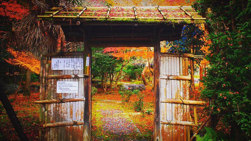 栖賢寺 京都 Kyoto Kyoto Autumn 紅葉 Autumn Leaves Travel Destinations Autumn Colors Enjoying Life Relaxing Hello World Kyoto, Japan Beauty In Nature Autumn
